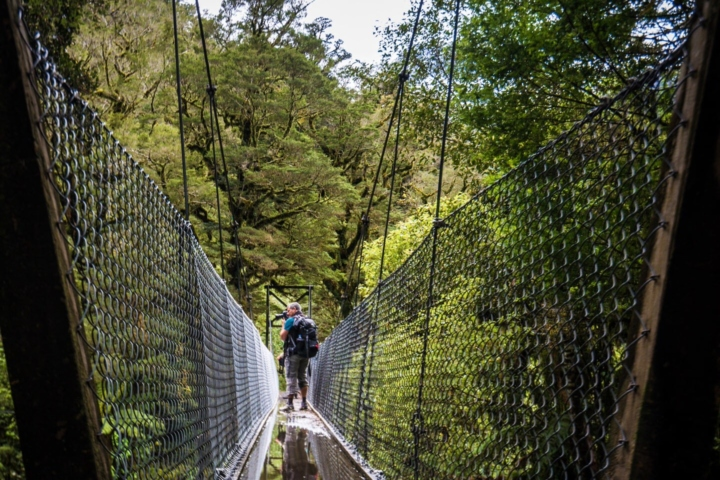 Hiking Milford track among dense vegetation, rivers, waterfalls everywhere, using swing bridges